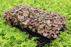 144tray_plants